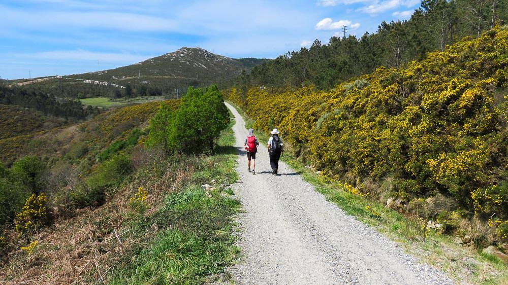 Landschaft mit Ginster, geschotterter Weg, blauer Himmel und zwei Pilger