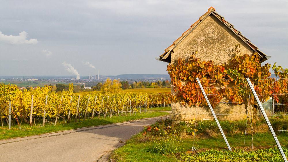 Kleines Häuschen und Weinberge in Herbstfarben in der Nähe von Heilbronn