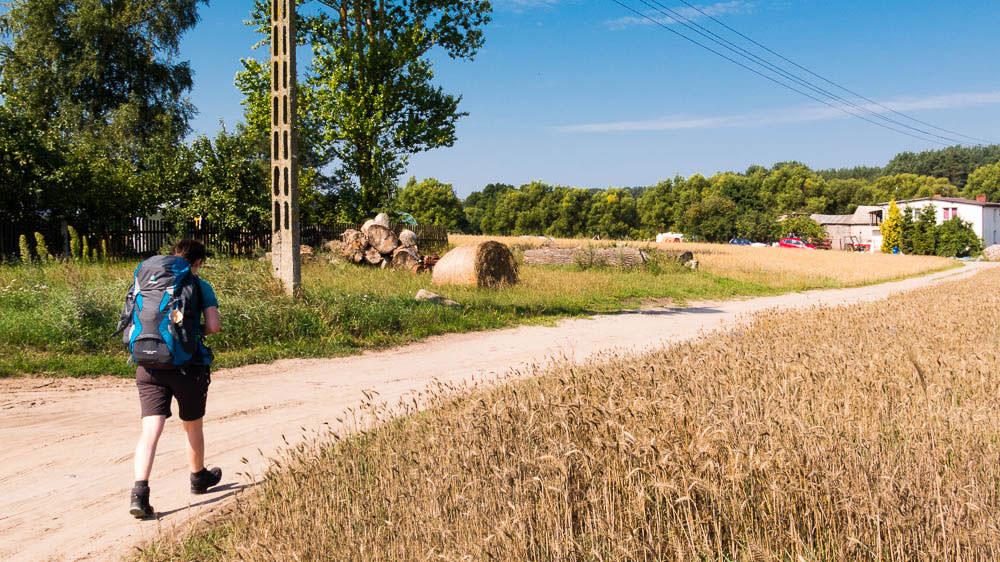 Pilgerin mit blauem Rucksack auf sandigem Weg mit Getreidefeld im Vordergrund