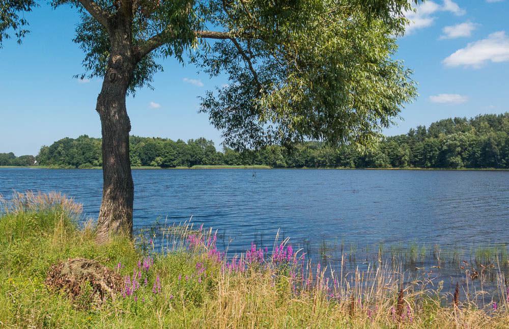 Blick auf den See mit einem Baum davor und einer Blumenwiese