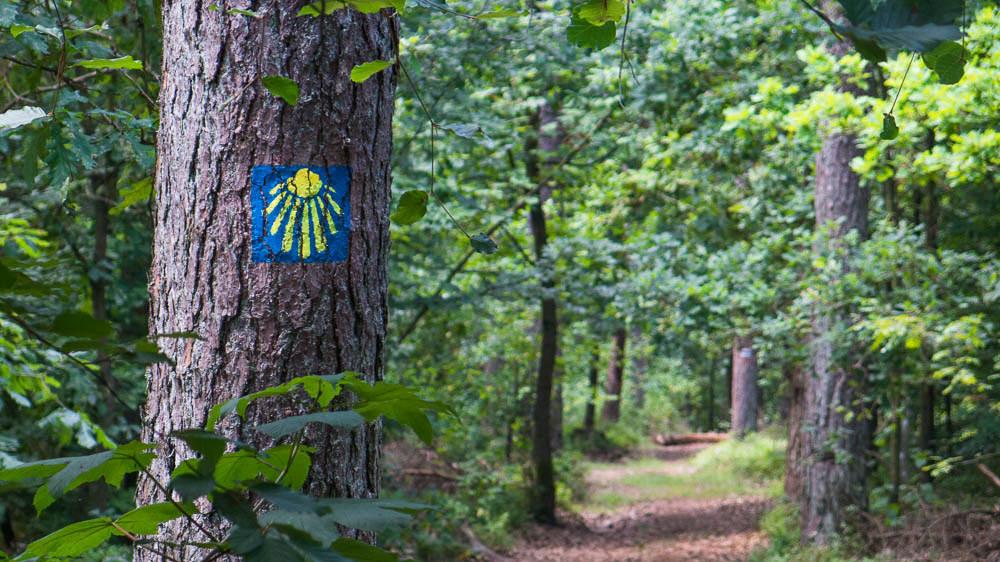 Das Wegzeichen der Jakobsmuschel ist aus Naturschutzgründen auf die Bäume aufgesprüht