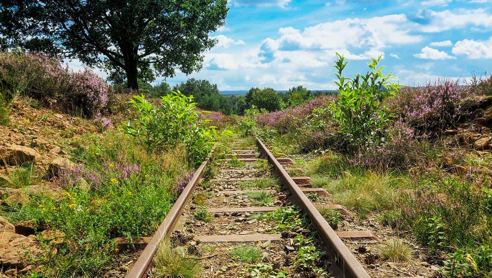 Schienen, die nicht mehr genutzt werden, blauer Himmel, viel grün und blühende Heide